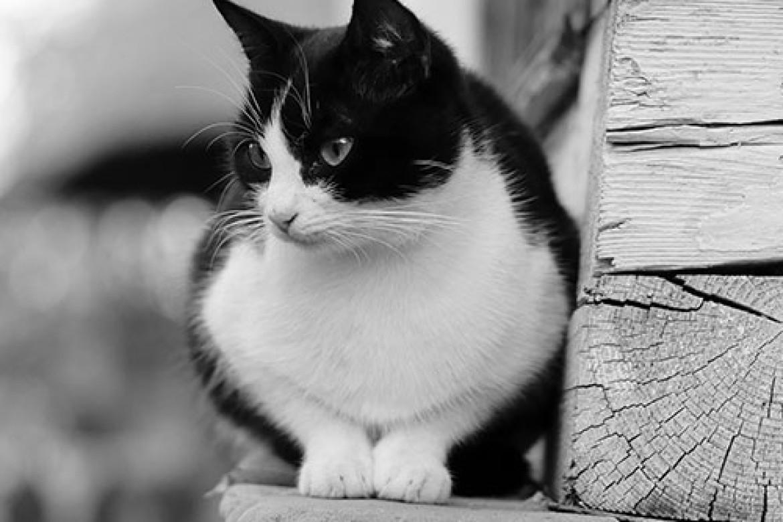 Smitten By Kittens?