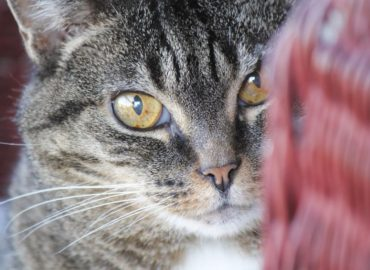 Managing Older Cats