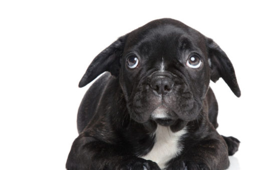 Identifying Negative Emotions in your Pet