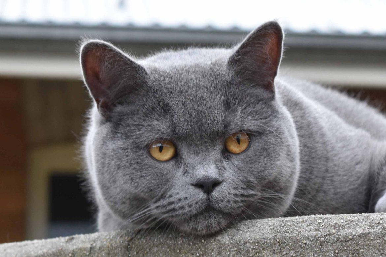 Feline Tick Prevention