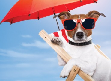 Sun Cancer in Pets