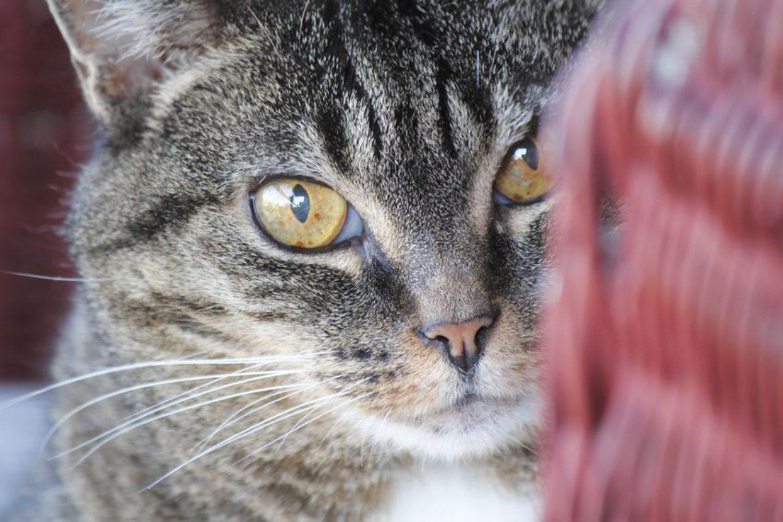 Managing Older Cats
