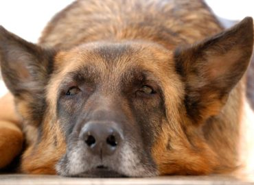 Is Your Dog Silently Suffering?